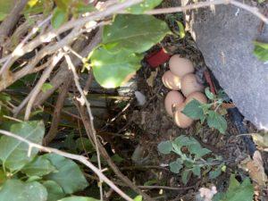 Eggs, eggs everywhere!